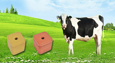 Control methods of five diseases of sheep in spring