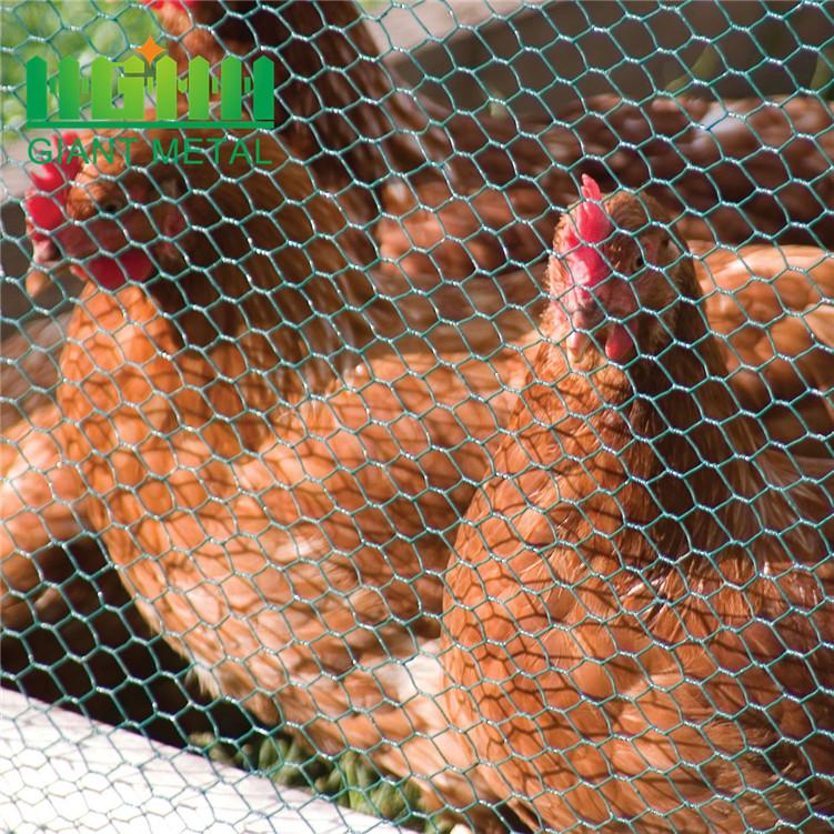 lowest price chicken wire mesh1_副本1.jpg
