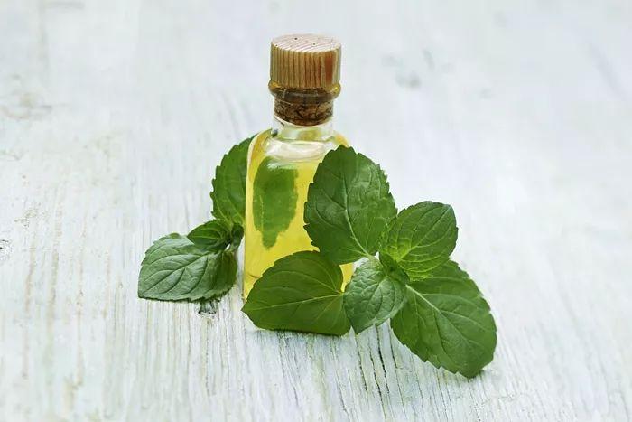 peppermint oil wholesale