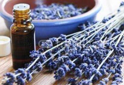 Lavender oil manufacturers