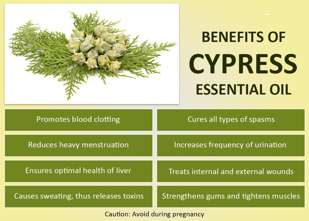 cypressbenefits1.jpg